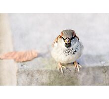 Sparrow - Don't Mess With Sparrows Photographic Print