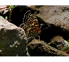 Plaid Butterfly Photographic Print