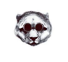 Doc. Lion Photographic Print