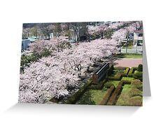 trees in bloom  Greeting Card