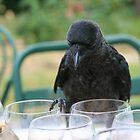 Smart Raven by Peter Hancock