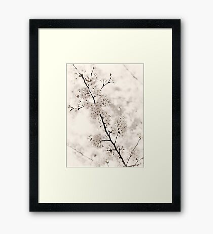Cherry blossom artistic closeup sepia toned art photo print Framed Print