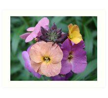 Tri-Colour Flower Art Print