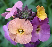 Tri-Colour Flower by Tom Newman