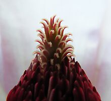magnolia topknot by ajax