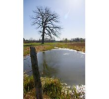 High Noon at the Pond Photographic Print