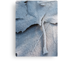 Frosted Leaf © Metal Print