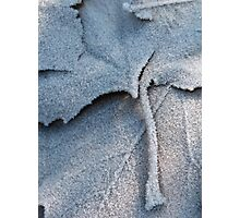 Frosted Leaf © Photographic Print
