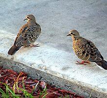 Mourning Doves by Glenna Walker