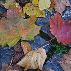 Autumn by bluecoomassie