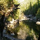 Reflections of Yosemite by Mar Silva