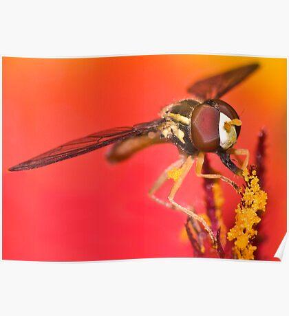 Pollen Paradise ! Poster