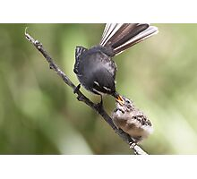 Grey Fantail and chick ~ Thanks Mum  Photographic Print