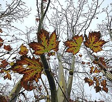 Last Leaves of Autumn. by George Petrovsky