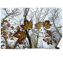 Last Leaves of Autumn. Poster
