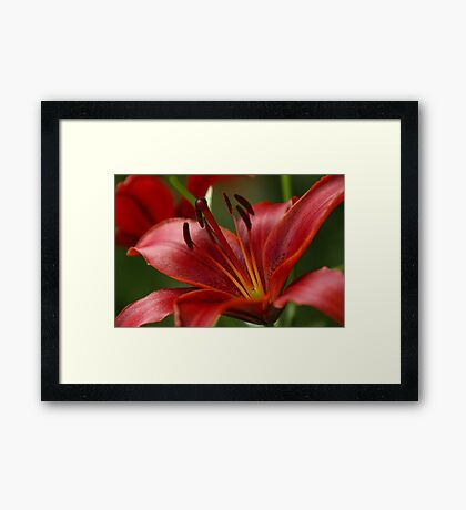 Upclose Summer's Passion Framed Print