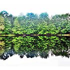 Forest Reflected by Tommy Seibold