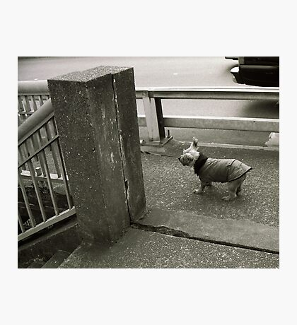 Dog in a Raincoat Photographic Print
