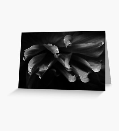 from out of the darkness we shall emerge Greeting Card