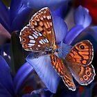 butterflies_o2 by Gabriel Popa