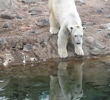 Polar reflection by persnicketier10