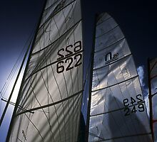 Sail Ahoy   by dcdigital