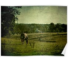 Grazing - Uralla, Northern Tablelands, NSW, Australia Poster