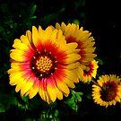 Colorful Blooms by Rosalie Scanlon