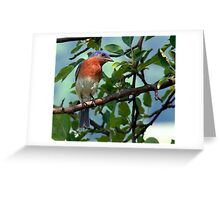Blue Bird.... Greeting Card