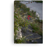 Cliffedge Flowers Canvas Print