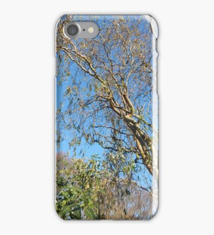 Scenic Trees iPhone Case/Skin
