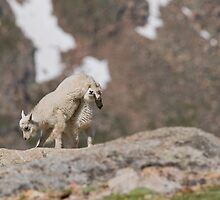 Mom - he's on my side of the rock! by Jay Ryser