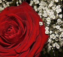 A single red rose for your lover by yeamanphoto