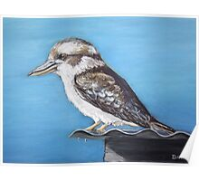 Kookaburra sits on the old tin roof Poster