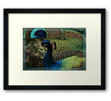 Reading the Book of Feathers Framed Print