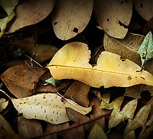 Forest floor by Louise Cooke