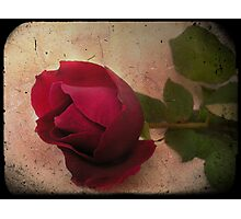 Forgotten Rose Photographic Print