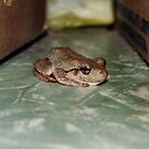 Spotted Frog by TerraChild