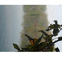 Wet Web Photographic Print