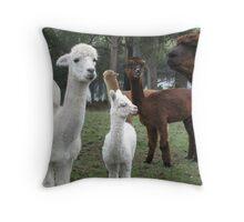 alpaca curiosity Throw Pillow