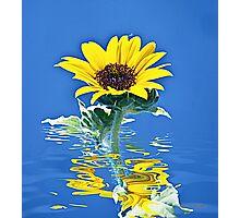 Sunshine Photographic Print