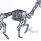 Camel Skeleton by Mylojs