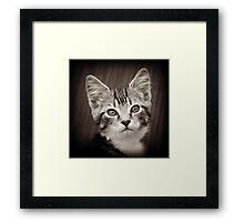 Frodo Kitten Framed Print