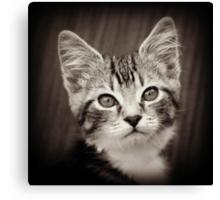 Frodo Kitten Canvas Print