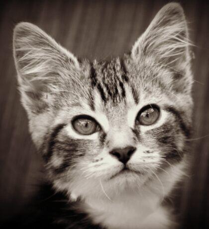 Frodo Kitten Sticker