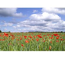 Field of poppies under cloudy sky Photographic Print
