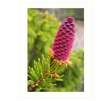 Pink fir cone Art Print