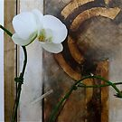 Orchid and seagull by Maggie Hegarty