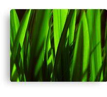 exotic grasses - green Canvas Print
