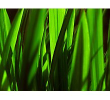 exotic grasses - green Photographic Print